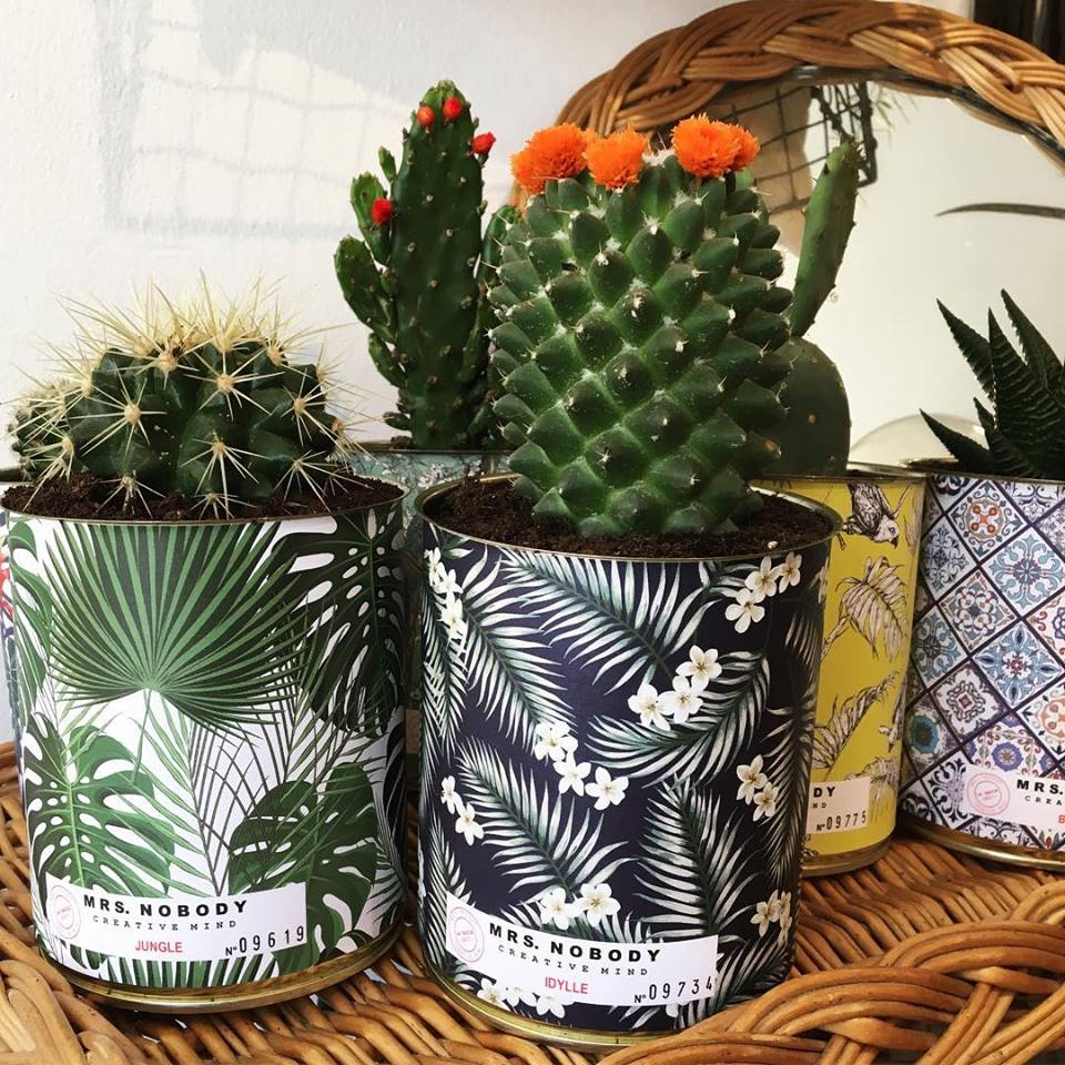 Tasses de décoration Cactus Rennes